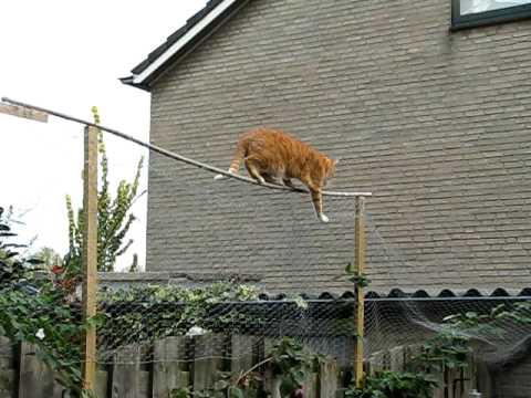 Kattenhek tuin 21 images show hier je tuin afrastering