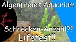 Algenfreie Scheiben im Aquarium - Welche Schneckenmenge? Was ist mit Gelegen? | Lifetest | Teil 1
