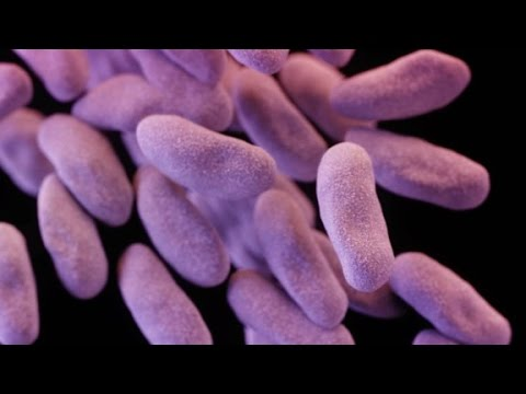 'Nightmare' Drug-resistant Bacteria Found In U.S.