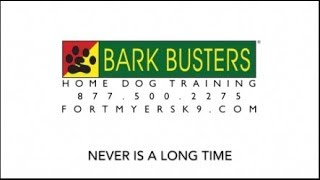 Golden Retriever & Labradoodle - Dog Training of Fort Myers K9 - Patrick Logue Dog Trainer