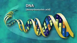 Dr  Jason Lisle - Science confirmes biblical creation