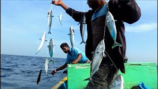 MACKEREL FISH CATCHING VIDEOS AT SEA