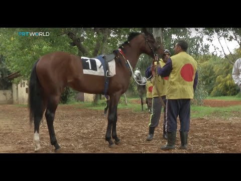 Future of horse racing at Beirut Hippodrome in doubt, Ben Said reports
