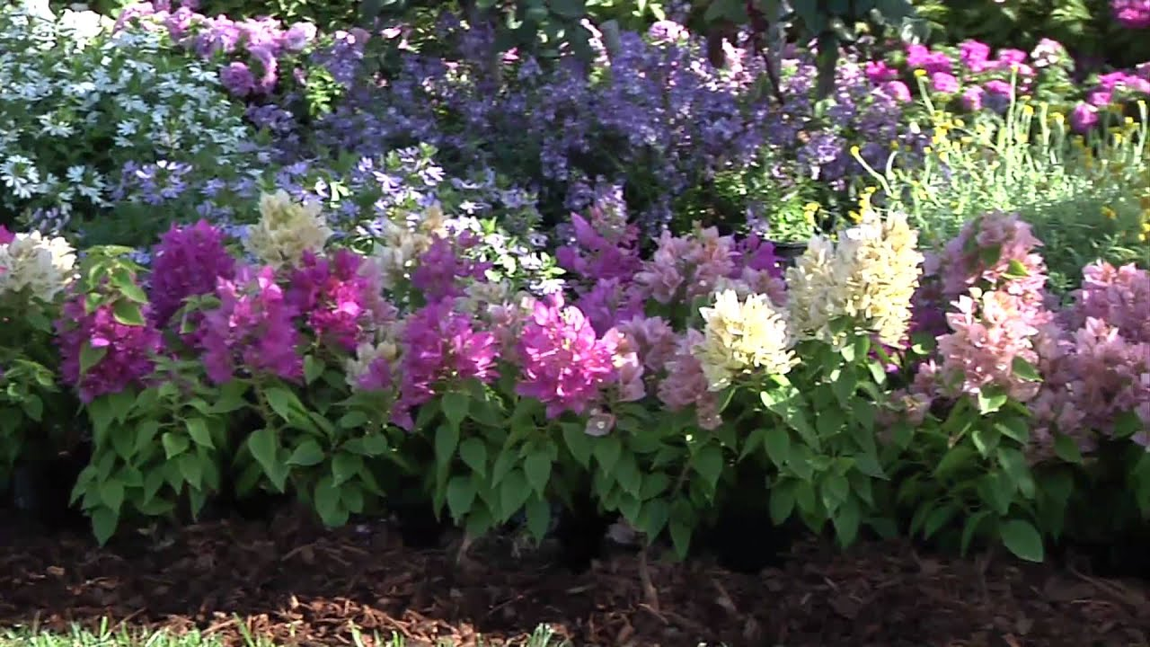 plant beautiful low maintenance beds borders youtube
