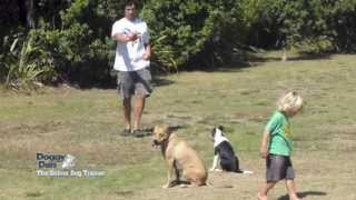 3 Huge dog training tips