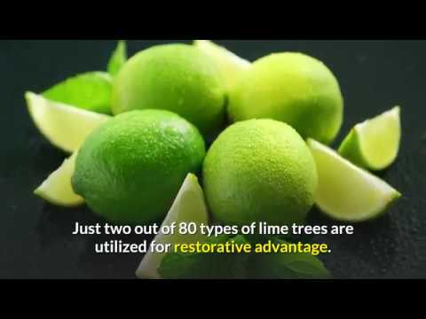 Benefits of Linden How to Make Linden Tea Benefits of Linden Oil Side Effects of Linden