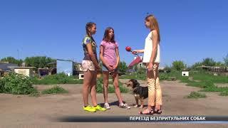 Куди виселять собак із притулку у Сумах?