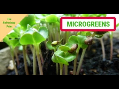 Microgreens - Nutritional Powerhouses Packed with Minerals - Grow Them Anywhere