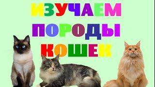 Изучаем породы кошек. Названия пород кошек. Развивающее видео для малышей