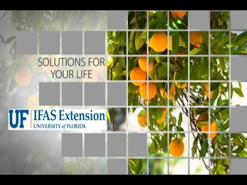 UF-IFAS St.  Lucie Extension December 2016