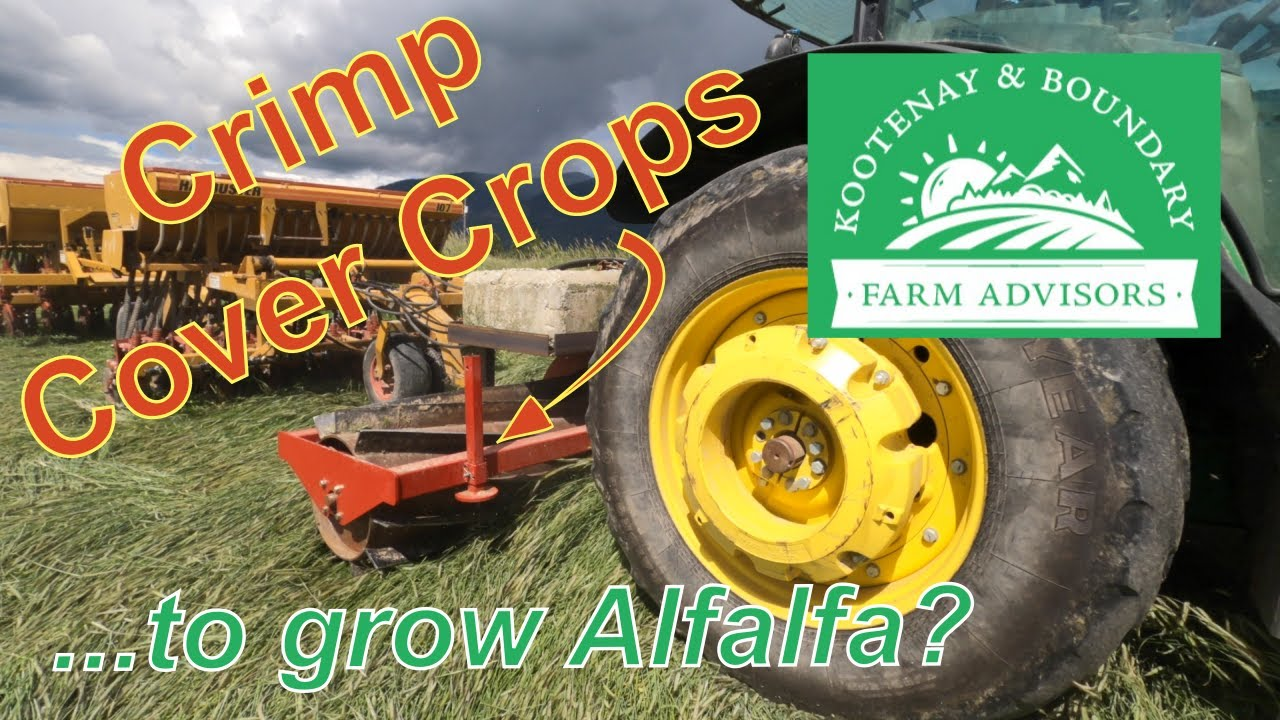 Crimping Cover Crops to Grow Alfalfa