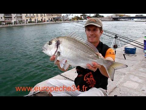 Pêche des grosses dorades de Sète par...