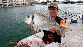 Pêche des grosses dorades de Sète par Europêche34