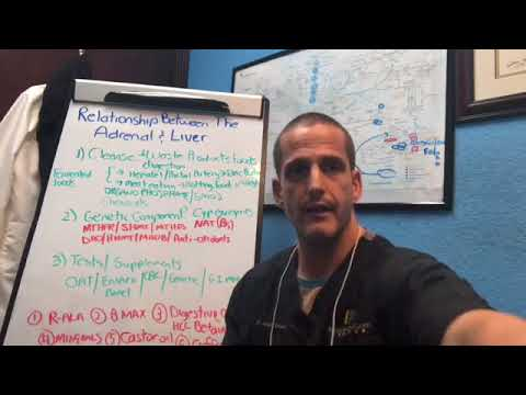 Adrenal Fatigue And Liver: How are they related?