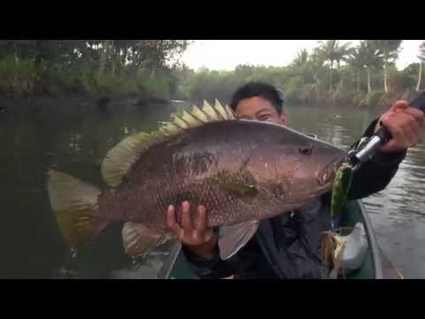 17lbs Papuan Black Bass on topwater with Gong Lei