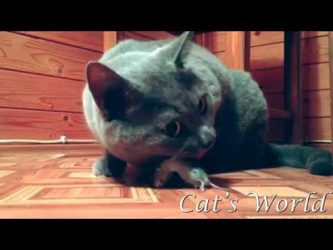 ネズミを食べる猫 4