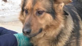 Новости из Даугавпилсского приюта для животных: Одри и Нора ищут хозяев