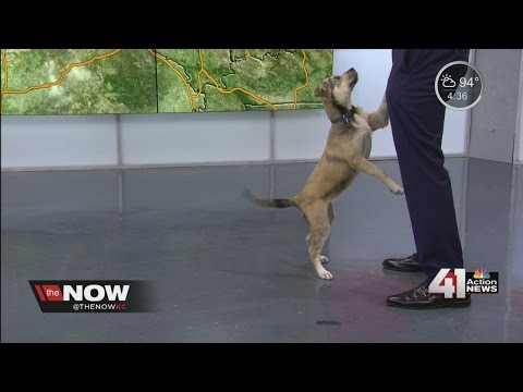 Sunny, Gary Lezak's weather puppy, is getting better at her tricks!