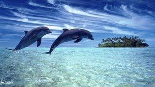 CATHERINE DUC - DEEP SEA  DREAMING