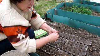 Посев моркови,, редиса, салата в ячейки от яиц. Прореживать не надо!(Удобный способ посева моркови и т.п. без последующего прореживания., 2016-04-27T23:02:35.000Z)