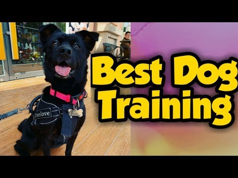 Best Discipline Dog Training | Part.01