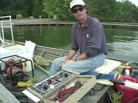 Fish Kills Linked To Water Pollutants
