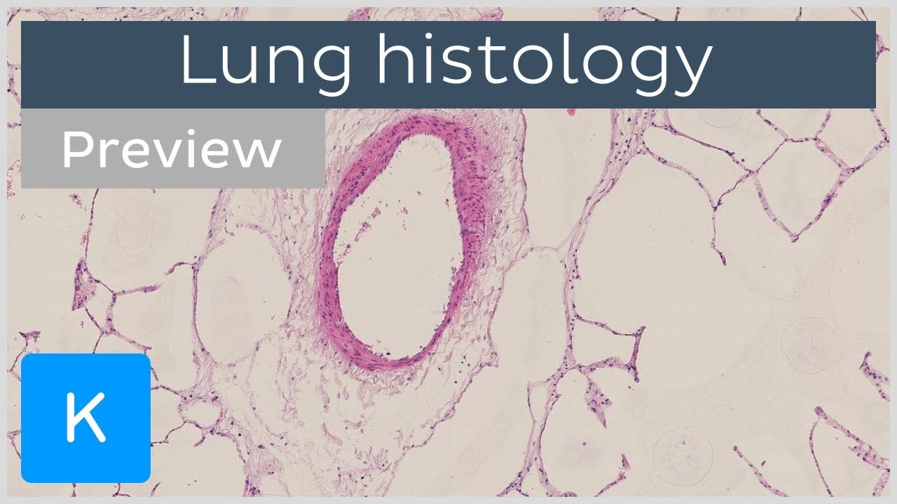 Lungs Tissues And Cells Preview Human Anatomy And Histology