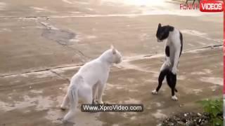 #Прикольное видео!!! Кот из Шао-Линя!!! Боец на все 100%#
