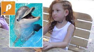 VLOG Дельфины красного моря   Едем отдыхать на красное море №7