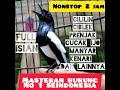 Masteran Kacer Gacor Full Isian Suara Jernih Durasi Panjang Mastering(.mp3 .mp4) Mp3 - Mp4 Download