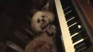 Poodles Play Piano