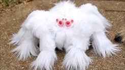 Die seltsamsten und ungewöhnlichsten Spinnen der Welt
