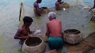 Best Asian Traditional Fram Fishing Video! #Natural Traditional Culture