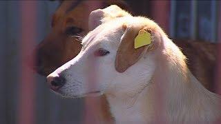 Бездомные собаки в Перми