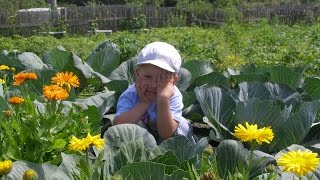 Как приготовить грядку для капусты.