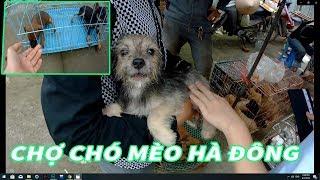 Phiên Chợ Chó Mèo Hà Đông | Chợ sinh vật cảnh lớn và rẻ nhất Hà Nội | 356 HÀ ĐÔng