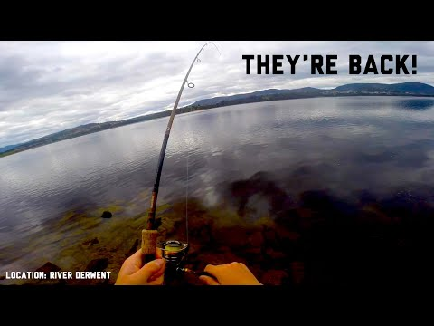 Bream Are Back! || Fishing Tasmania 2019: Upper River Derwent Estuary