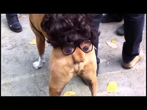 Смешные собаки - Смешное видео