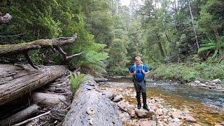Solo overnight camping adventure in the Tasmanian rainforest