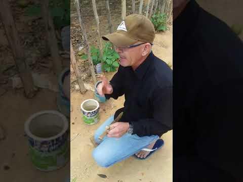 João fazedor de alianças em Boninal BH  povoado de Guaribas