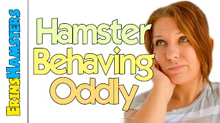 NORMAL BEHAVIOURS FOR NEW HAMSTERS