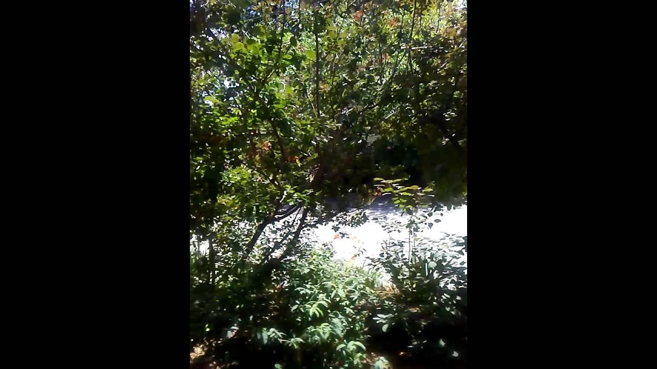 Bernice Gardens . little rock arkansas