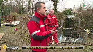 Des chiens-sauveteurs chez les sapeurs-pompiers de Paris - La Quotidienne
