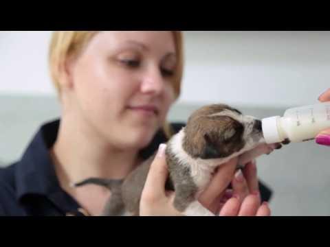 Dog Care Clinic e.V. - We help !