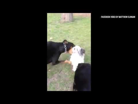 Man captures local dog attack on film