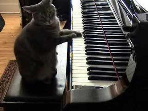 musikalisk katt