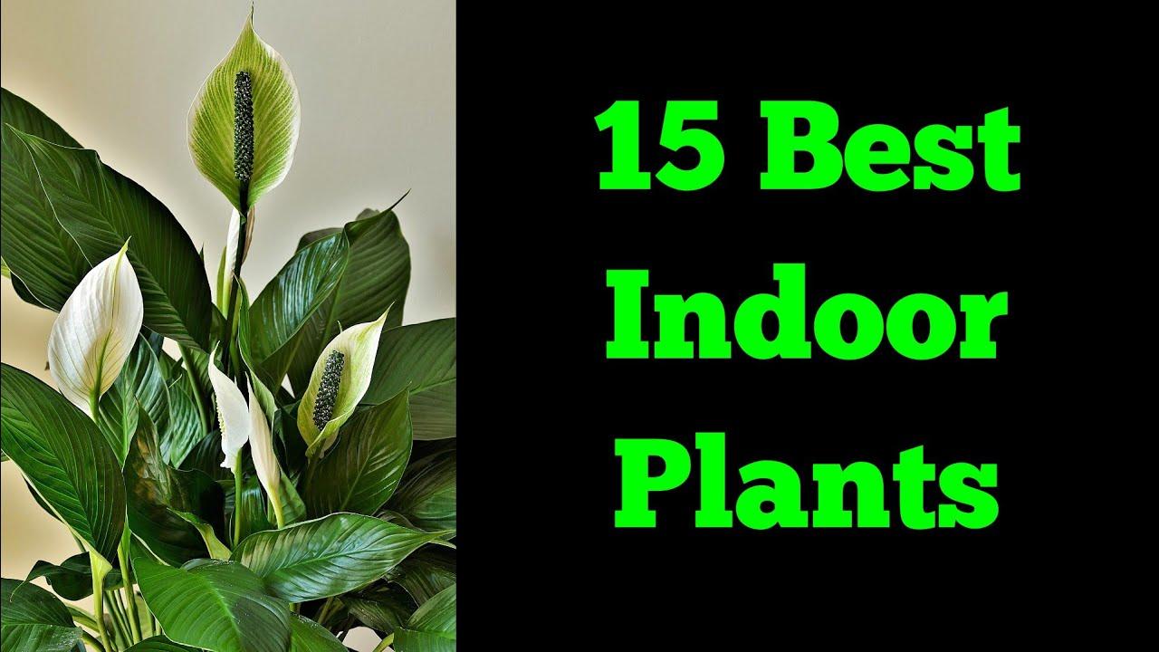 15 Indoor Plants Grow At Home Indoor Plants Indoor Plants Name Youtube