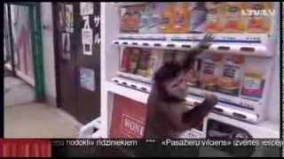 За покупку домашней обезьянки грозит внушительный штраф