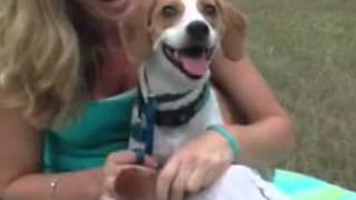 Beau Good Dog Rescue