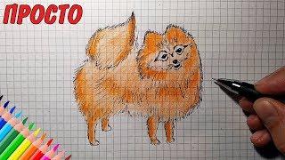 Как нарисовать ШПИЦА | Уроки рисования | Простые рисунки для детей и начинающих